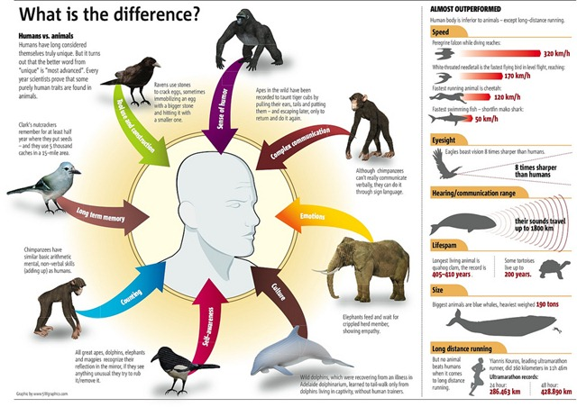 What's the difference between humans & animals